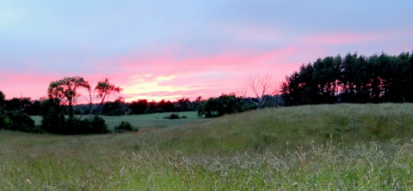 Sunset over pasture